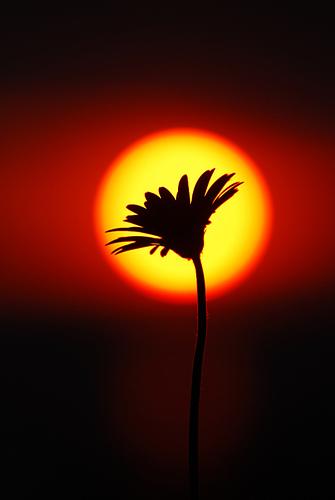 rasarit-de-soare-imbratisand-o-floare.jpg