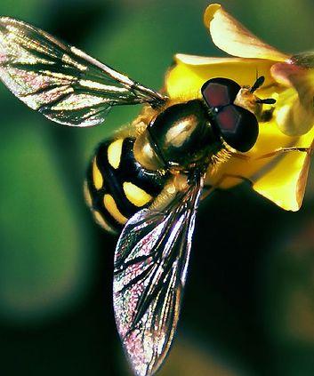 precum-aduna-albina-mierea.jpg