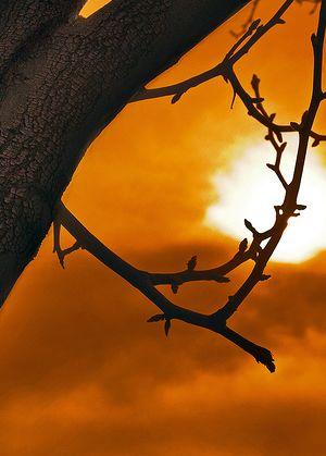 distanta-de-la-un-copac-la-soare.jpg