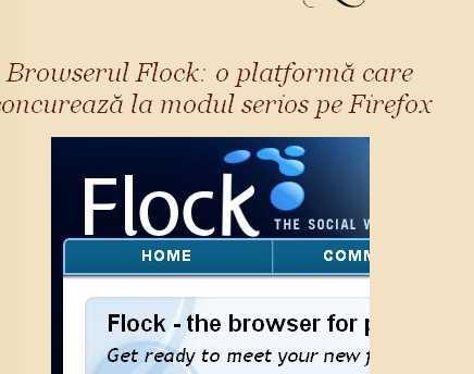 flock.jpeg