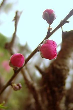 inmugurire-rosie.jpeg