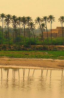 seara-langa-palmieri.jpeg