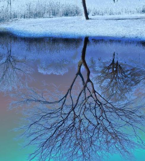 copacul-adanc