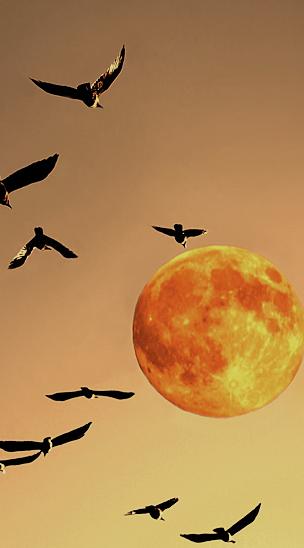 pasari-cu-luna