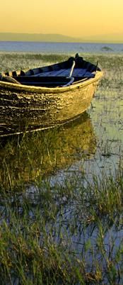 in-delta