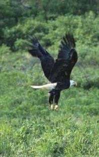 sa-fii-vultur-spre-cer