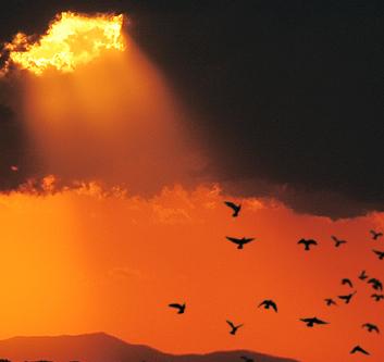 a-zbura-in-lumina-milei-lui-Dumnezeu