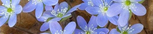 albastriul-ochilor-tai