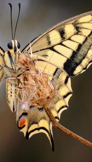 fluturi-si-spini