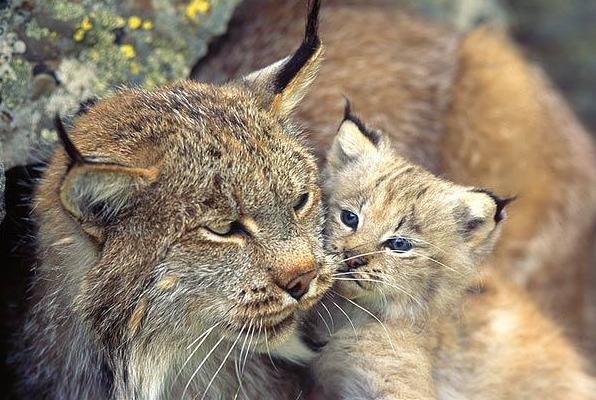un pisic mare si un pisic mai mic, chiar foarte mic