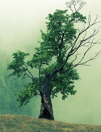 si copacii sunt plouati de anotimpuri neprietenoase