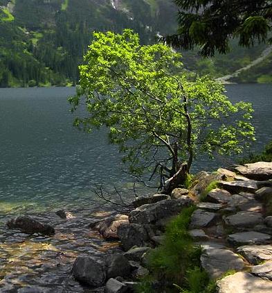 izvorul copacului