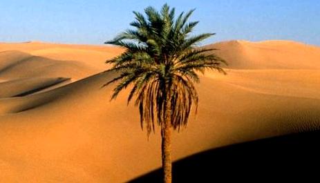 asceza palmierului