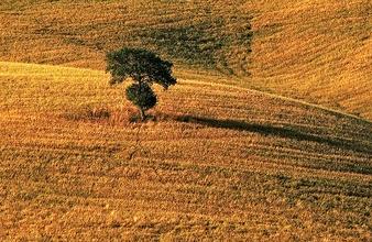 copacul  din pustiu
